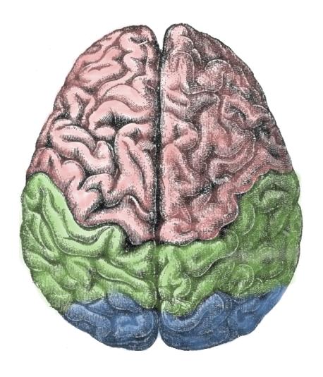 Pornography is like a drug -- brain addiction