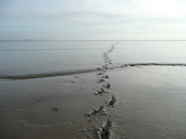 Footprints_in_the_mud_-_geograph.org.uk_-_1140102